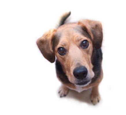 מגניב ביותר אימוץ כלבים,אימוץ חתולים,ימי אימוץ,אימוץ בעלי חיים,מדורי אימוץ FM-33